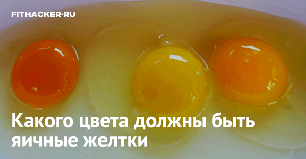 Почему куры несут яйца с зелёным желтком