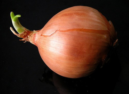 Onion-Liz-West-e1421941695490