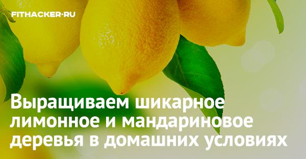 Как вырастить лимон и апельсин дома из косточки и черенка