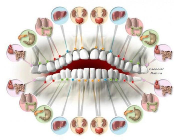 Читаємо по зубах про хвороби ... Лікарі здивовані точністю цього методу!