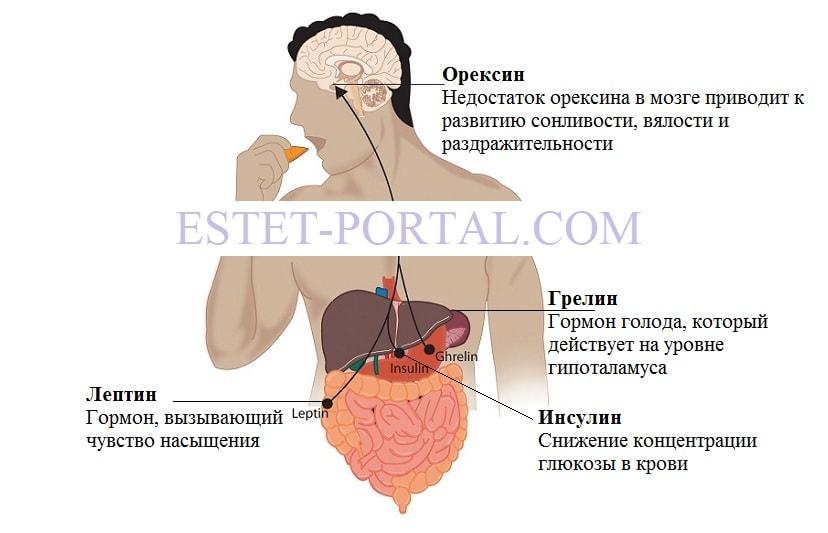 ves-i-hormon1-min