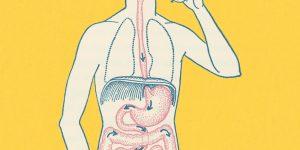 Boy's Gastrointestinal Tract