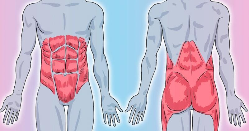 Мышечный корсет спины упражнения